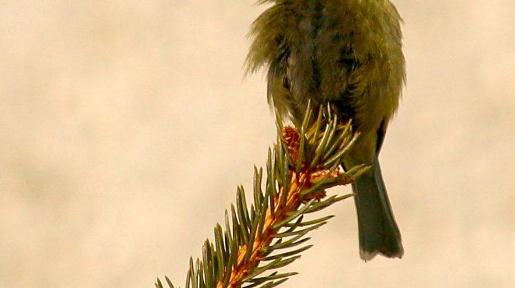 bird-1404694